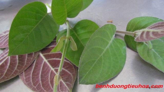 bai-thuoc-dan-gian-chua-dau-da-day-nhanh-chong (1)