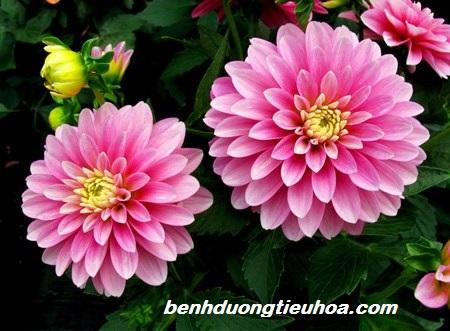bai-thuoc-dong-y-chua-dau-da-day-tot-nhat (2)
