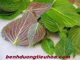 thuoc-chua-benh-nong-rat-dau-vung-thuong-vi-da-day (5)