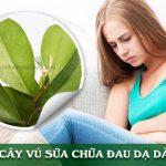 dùng lá vú sữa chữa đau dạ dày