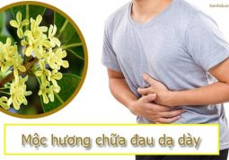 chữa đau dạ dày bằng mộc hương