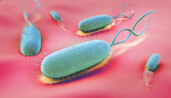 Nhiễm vi khuẩn hp gây đau dạ dày ở trẻ