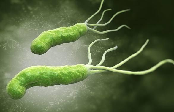 vi-khuan-hp-da-day-helicobacter-pylori-co-nguy-hiem-khong-2
