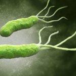 Vi khuẩn Helicobacter pylori (Hp) là gì?