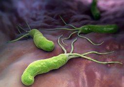 Vi khuẩn HP là nguyên nhân hàng đầu gây viêm dạ dày