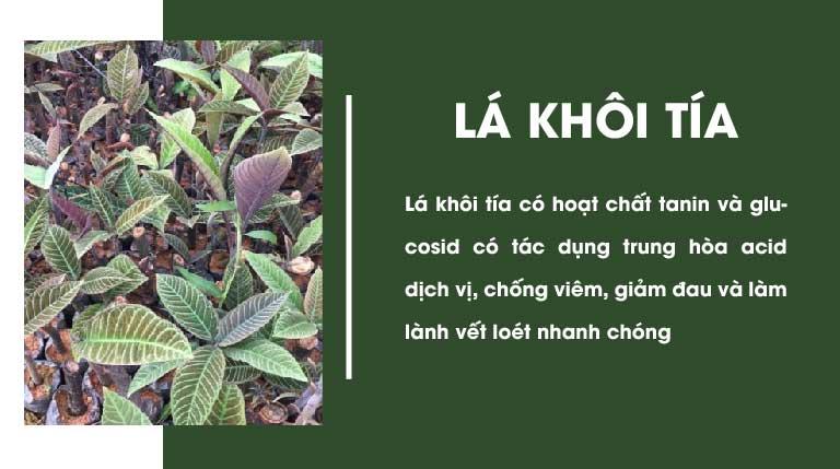 Lá khôi tía cũng có nhiều thành phần và công dụng đặc biệt trong chữa đau dạ dày